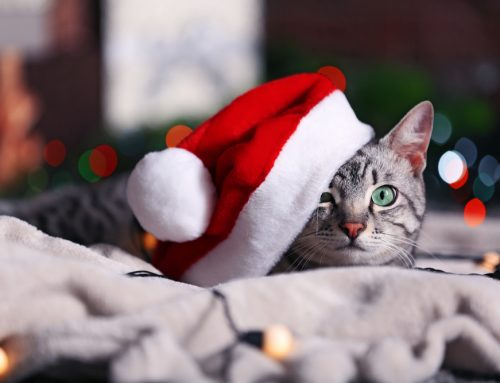 Holiday Hazards Ahead: Every Pet Owner Should Watch for These Dangers