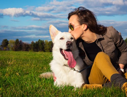 Keeping Your Pet Healthy in 2020
